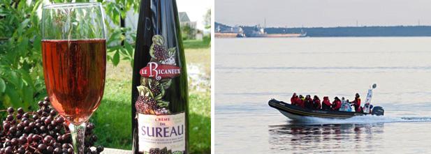 Gauche – Route des Vins dans Chaudière-Appalaches, Droite – Croisières du Capitaine