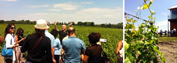 Patrick, notre guide, explique les particularités du vignoble sous un beau soleil d'été!