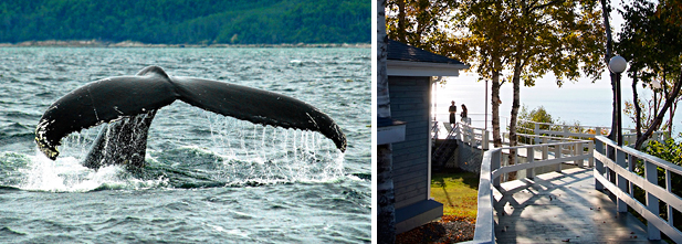 Gauche : voir les baleines avec Croisières AML. Droite : l'Auberge de la Pointe