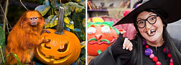 L'Halloween à Espace pour la vie, crédit photo de gauche Claude Lafond