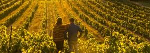 La Route des vins de Brome-Missisquoi